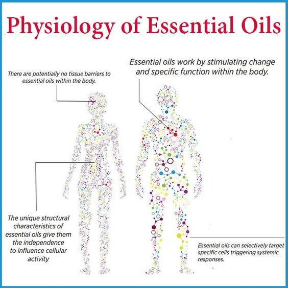 how oils work in body