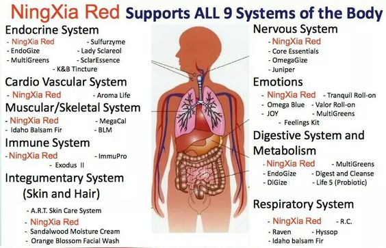 N red 9 systems