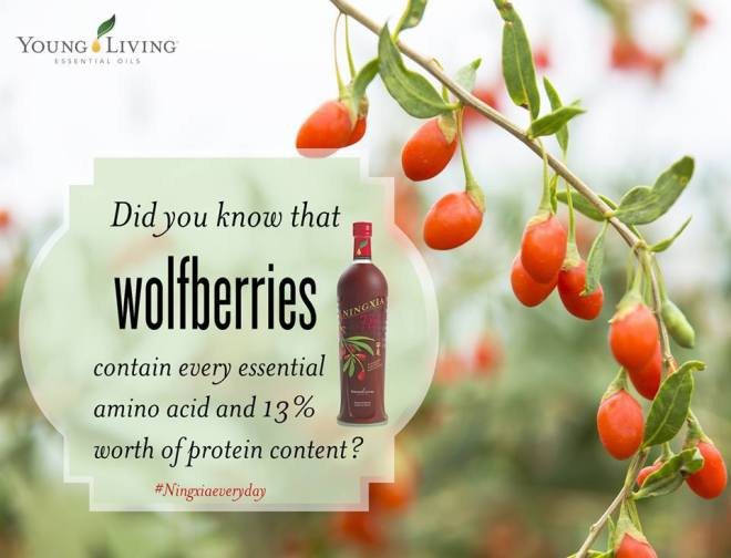 wolfberries