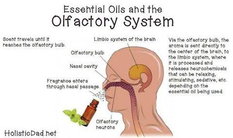 inhale2-olifactory