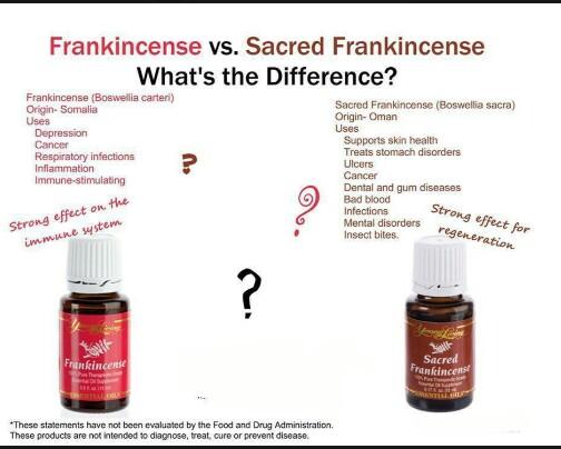 frank-vs-sacred