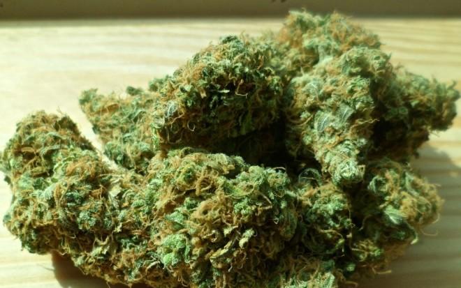 cannabis-448661_1920-1024x642