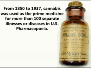 cannabis-old-med