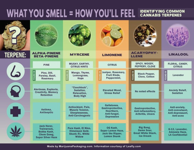 cannabis-terpenes-what-you-smell-is-how-youll-feel_558356861aead_w1500