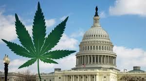 wh-cannabis