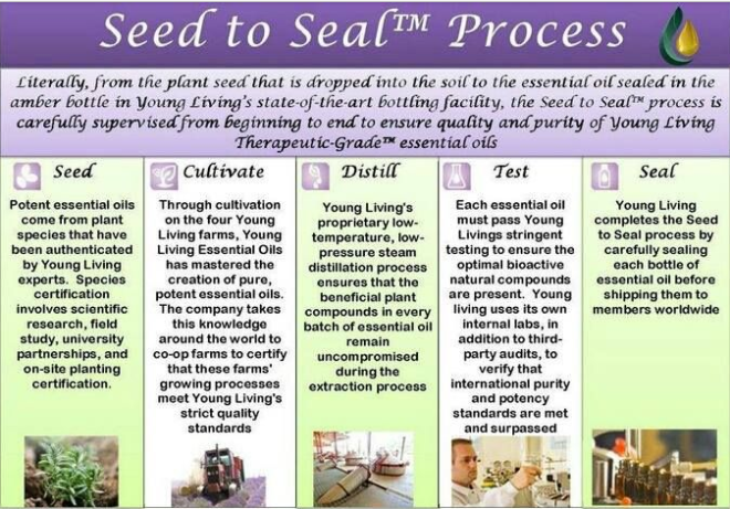 seed-to-seal1