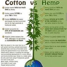hemp cotton