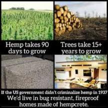 hemp v trees