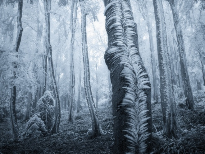 The 100 best photographs ever taken without photoshop - Frosted trees