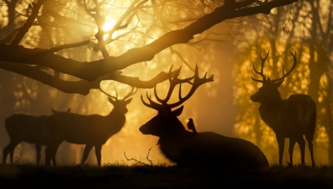 The 100 best photographs ever taken without photoshop - Sunrise in Bushy Park, London