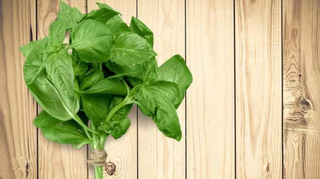 basil-herb-fresh-organic-green-leaves-bunch