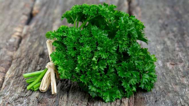 parsley-herb-fresh-green-leaves