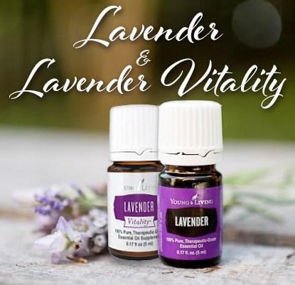 lavender31